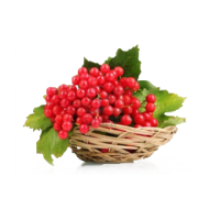 «Калина – рослинний символ українського народу»